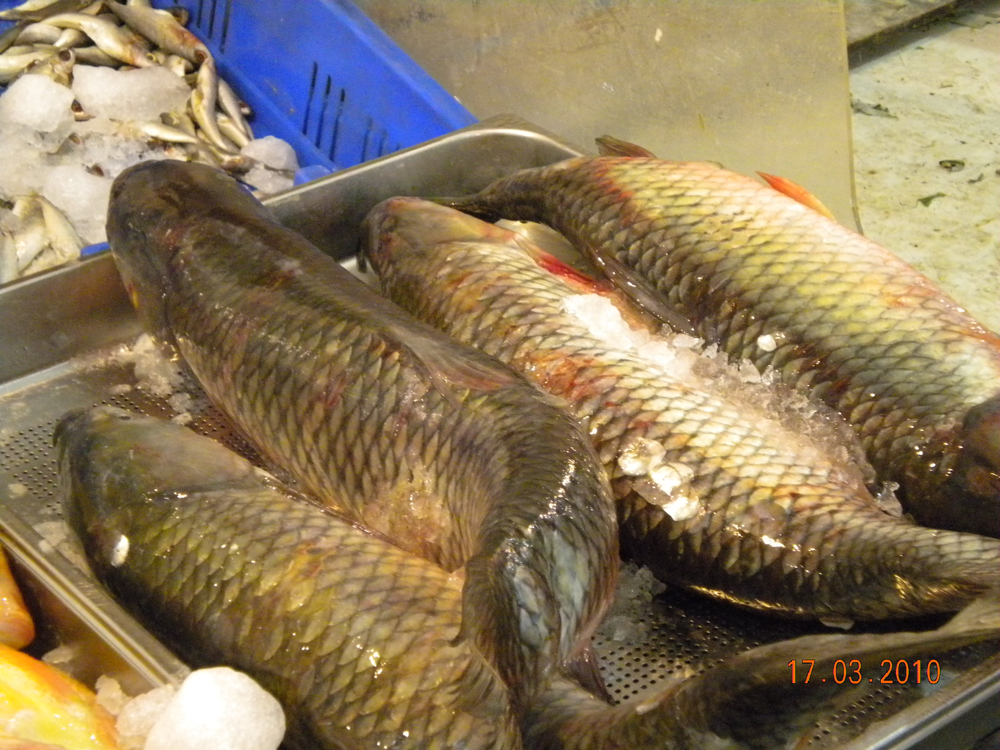 fish-fresh-in-shuk-11